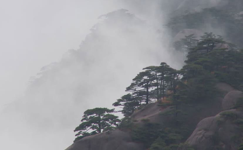 545247558-huang-shan-anhui-mysterious-mountain-forest