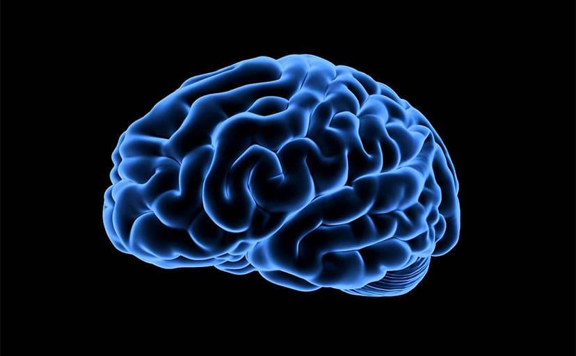 脳(フリー素材)