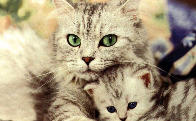 猫の親子(フリー写真)