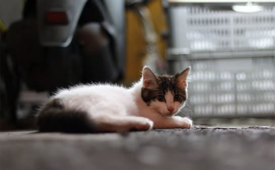 猫(フリー写真)
