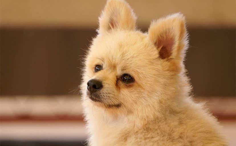 犬(フリー素材)