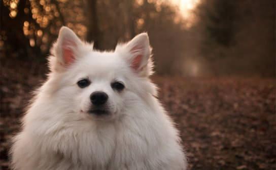 犬(フリー写真)