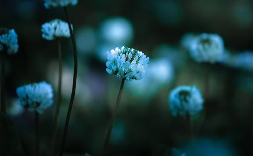 花(フリー素材)