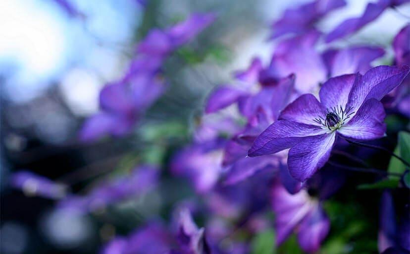 花(フリー写真)