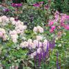 薔薇の咲く庭(フリー写真)