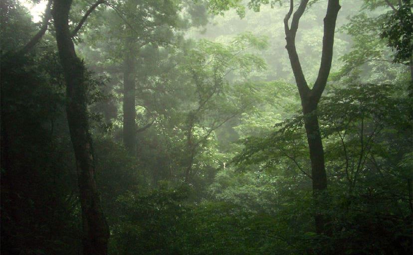 神秘的な森