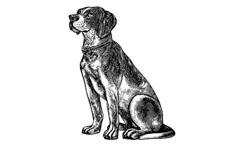 犬(フリーイラスト)