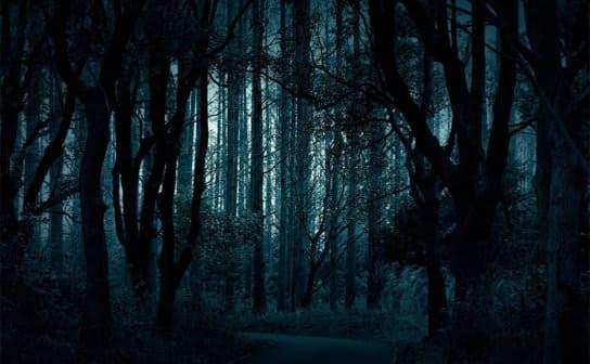 夜の林(フリー写真)