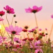 お花畑(フリー写真)