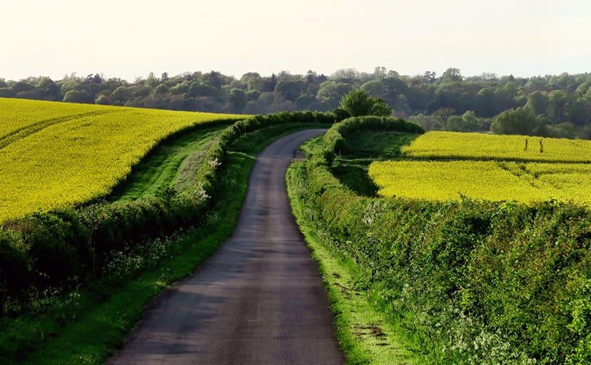 田舎道(フリー写真)