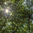 樹木(フリー写真)