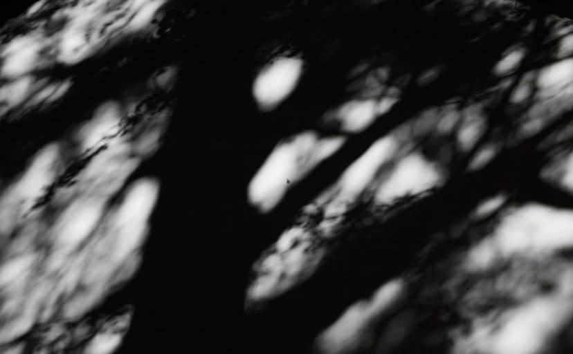 影(フリー写真)