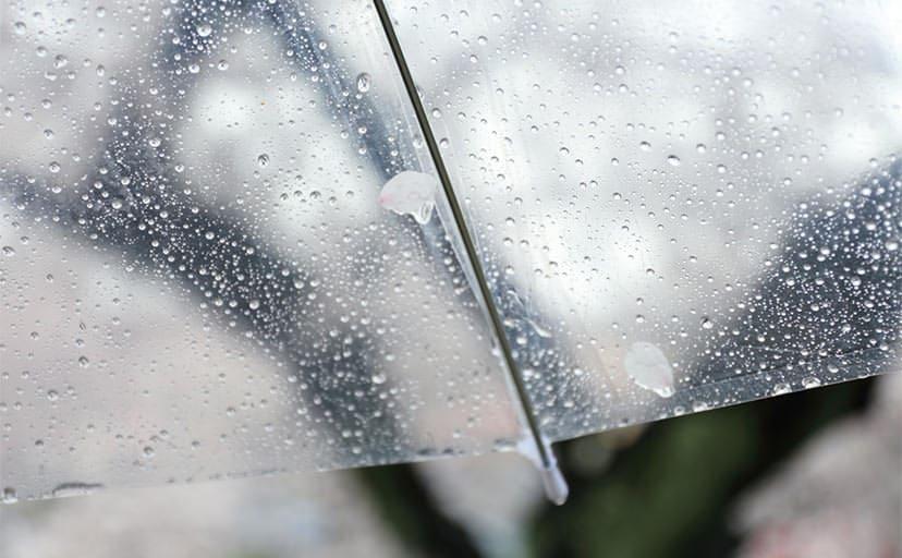 雨の日の傘(フリー写真)