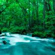 渓流(フリー写真)