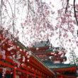 京都(フリー写真)