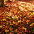 紅葉(フリー写真)