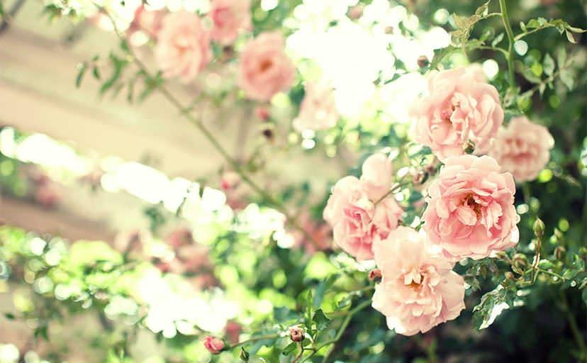 庭に咲く花(フリー写真)