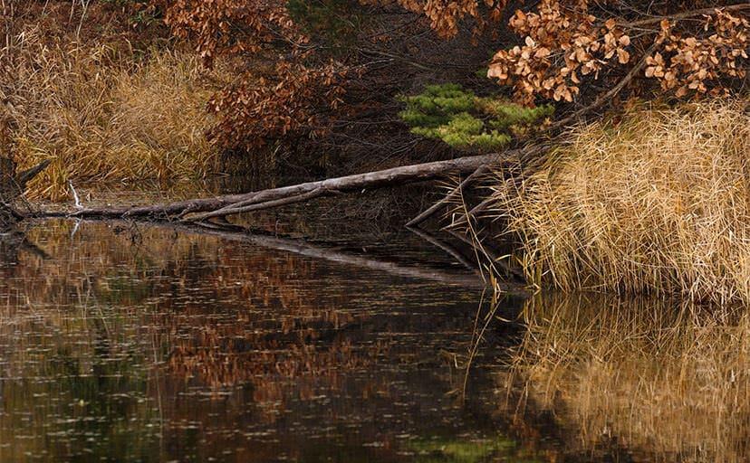沼と倒木(フリー写真)