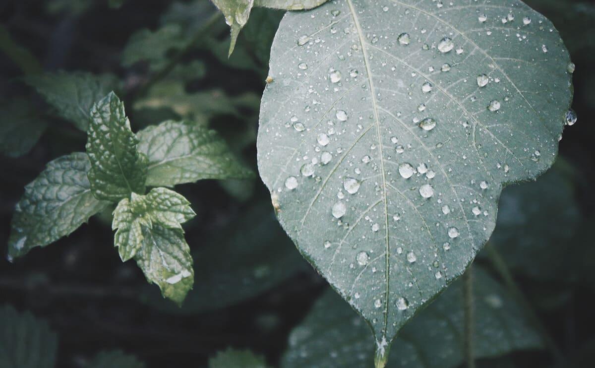 雨の日の葉っぱ