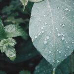 雨の日のおばちゃん