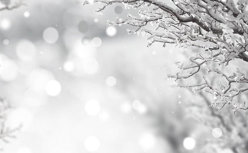 枝に積もる雪(フリー写真)