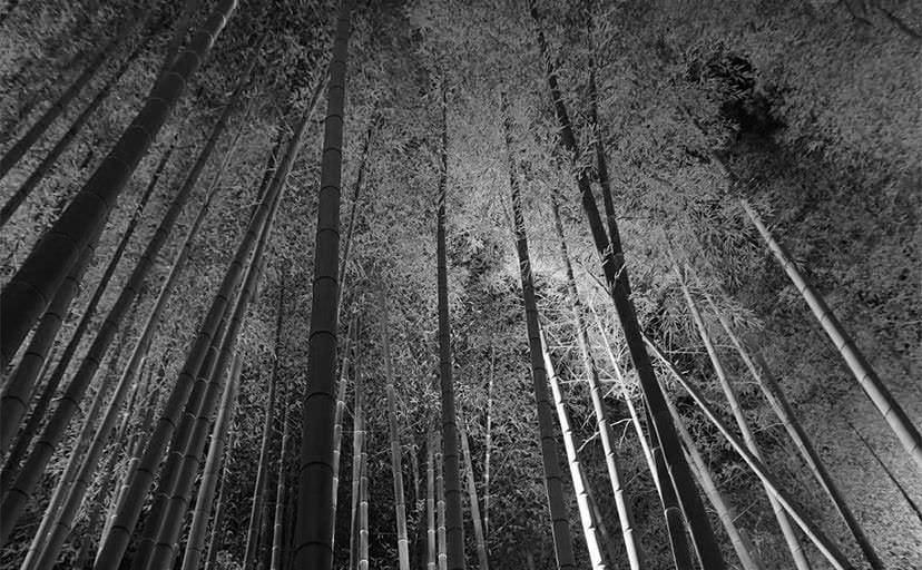 竹藪(フリー写真)