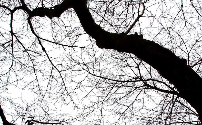 木の枝(フリー写真)