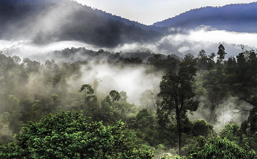 霧の出た山(フリー写真)