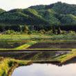 山間の田んぼ(フリー写真)