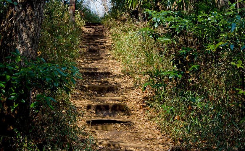 不気味な山道(フリー写真)
