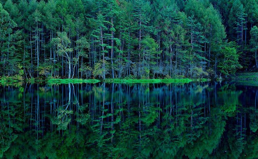 夜の池(フリー写真)
