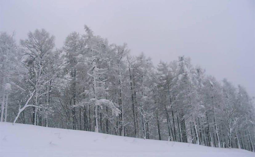 雪国(フリー写真)