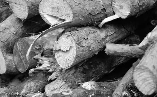 材木(フリー写真)