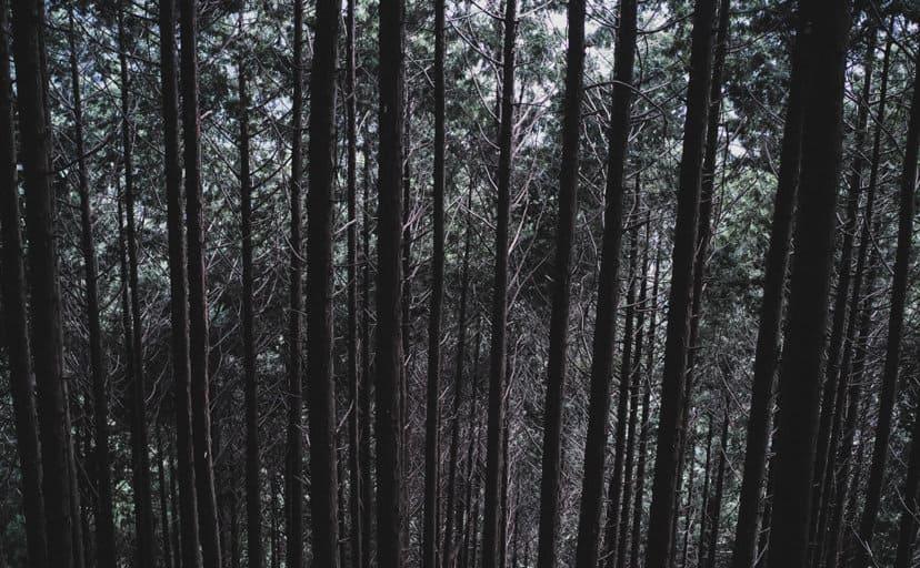雑木林(フリー写真)
